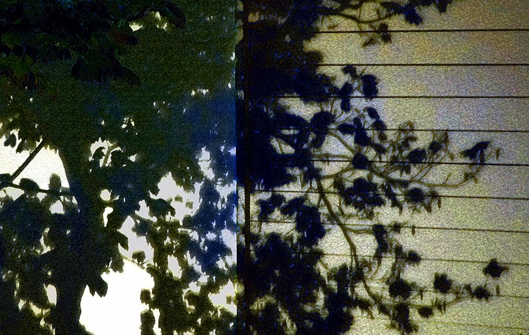 Night_shadows