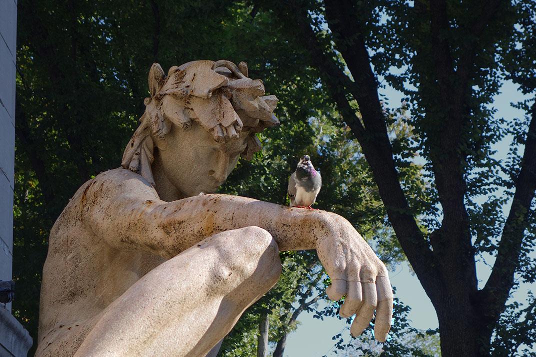 Greek_god_and_pigeon