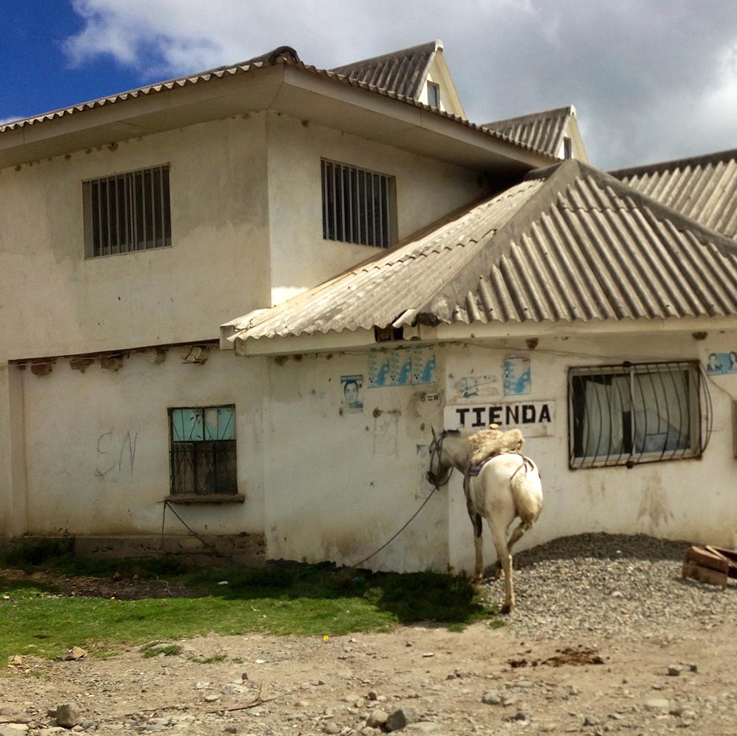 Horse Outside Shop